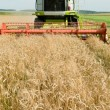 Harvesting combine in the wheat field — Stock Photo #5365790