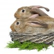 Stock Photo: Two rabbits in a basket and vegetables