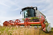 Harvesting combine in the wheat field — 图库照片