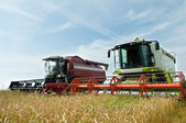 Two working harvesting combines — Stock Photo