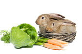 Two rabbits in a basket and vegetables — Stock Photo