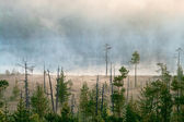 Wood lake with rising steam from a water table — Stock Photo