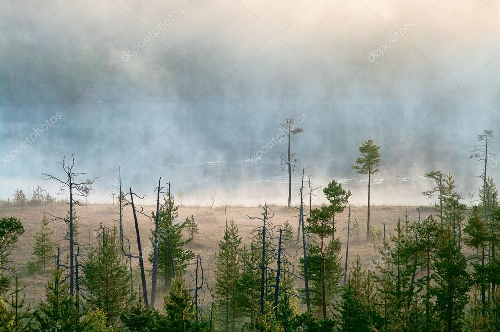 Morning in taiga forest. Fog on the surface of water. Tranquil lake.  — Stock Photo #4630687