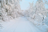 Snowy road with trees — Stock Photo