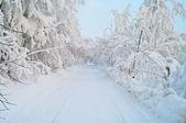 Besneeuwde wegnaar bomen — Stockfoto