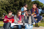 College Students Studying Togheter at Park — 图库照片