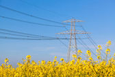 Electricity Pilon in the Countryside on Spring — Stock Photo