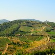 Chianti Region — Stock Photo #4533615