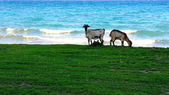 Grass and Sea — Stock Photo