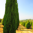 Garden in Tuscany - Stock Photo