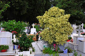 白色的墓碑 — 图库照片