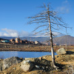 ������, ������: Dead tree