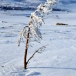 Snow on needles of fir after snowstorm - Stock Photo