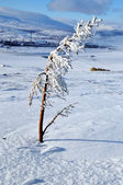 Snow on needles of fir after snowstorm — Stock Photo