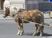 две лошади на улице — Стоковое фото