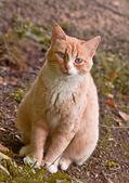 Cat. — Stock Photo