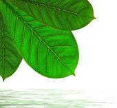 Leaves design — Stock Photo