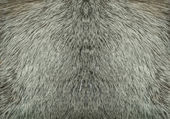 Fur closeup — Stock Photo