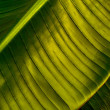 Tropical leaf — Stock Photo