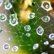 Morning dew on spider web — Stock Photo