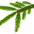 Fir branch — Stock Photo #4282371