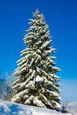 Christmas Tree with Snow — 图库照片