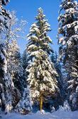 Christmas Tree with Snow — Stock Photo