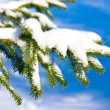 Christmas evergreen spruce tree with fresh snow — Stock Photo #4602364