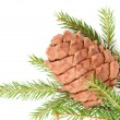 Great fir cone — Stock Photo