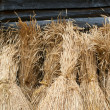 Royalty-Free Stock Photo: Sheaves of wheat
