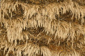 Texture of wheat — Stock Photo