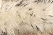 Animal fur texture background — Stock Photo