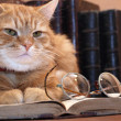 Clever Cat — Stock Photo #4097887