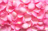Rose Petals Background — Stock Photo