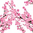 Sakura tree 2 — Stock Vector