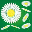 Chamomile flowers — Stock Vector
