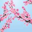 Sakura tree - Stock Vector
