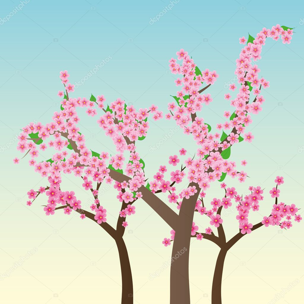 Cherry blossom, flowers of sakura, tree brunch, blue sky, spring background,vector illustration — Stock Vector #5354188