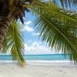 Palm and Caribbesea — Stock Photo #4307058