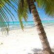 Stock Photo: Palm on calm caribbesea