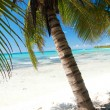 Beautiful palm on caribbean sea - Stock Photo