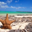 Starfish on caribbean beach — Stock Photo #4446759