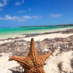 Starfish on beach — Stock Photo