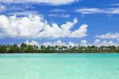 Palms on caribbean sea coastline — Stock Photo