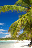 Palm on island Saona — Stok fotoğraf