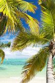 Palms on island Saona — Stock Photo