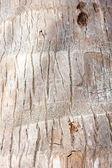 Palm crust macro — Stock Photo