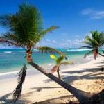 Palms on beach — Stock Photo