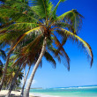Palms on beach — Stock Photo #4746820