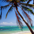 Palms on beach — Stock Photo #4746829
